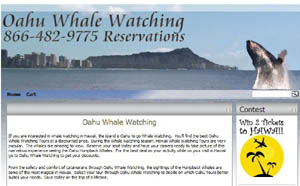 Oahu Whale Watching